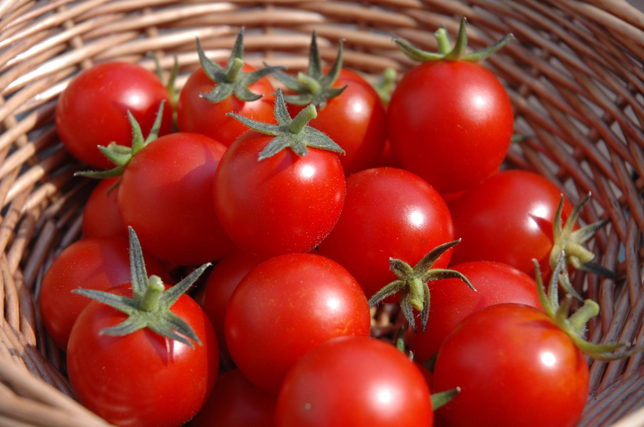 tomato-post-1